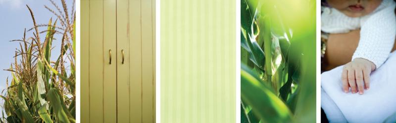 דוגמאות לעיצוב סביבת עבודה בגווני ירוק, בדגש על תחושת רעננות ולבלוב